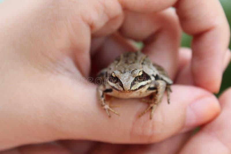 神仙的公主青蛙 免版税库存照片