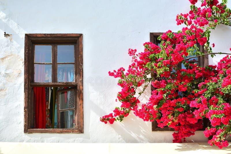 神仙的房子 葡萄酒木窗架在地道房子里 开花的分支垂悬在窗口 地中海样式在房子里 库存照片