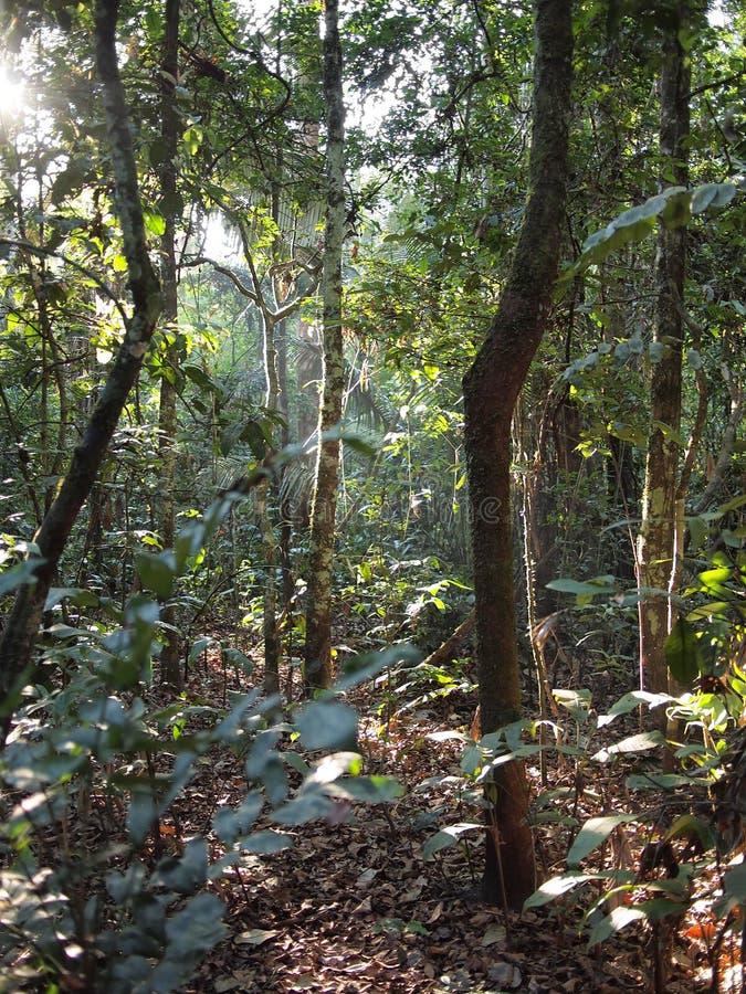 神仙的森林光传说 免版税图库摄影