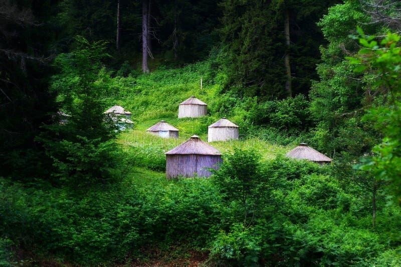 神仙的森林 库存图片