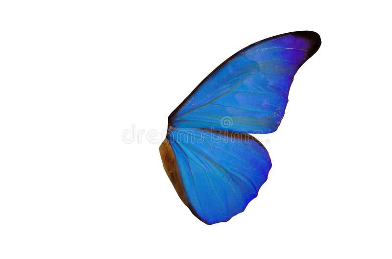 神仙的翼 免版税库存照片
