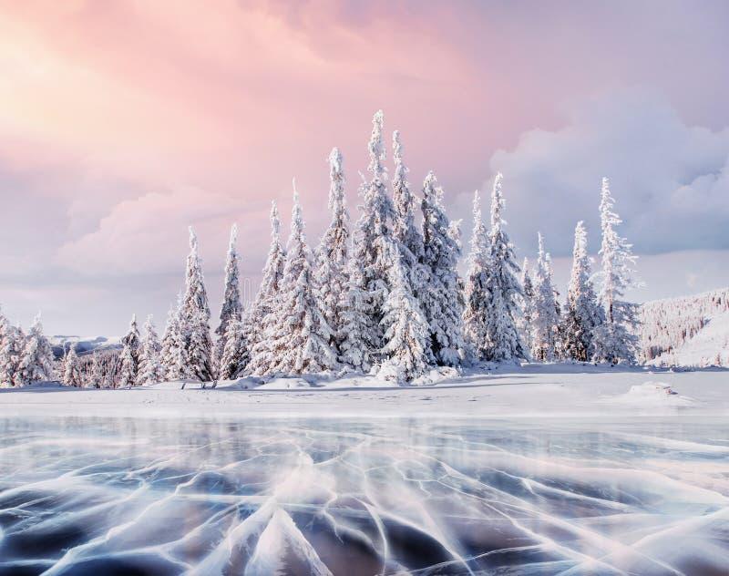 神奇冬天风景庄严山在冬天 不可思议的冬天积雪的树 照片贺卡 Bokeh 免版税库存照片