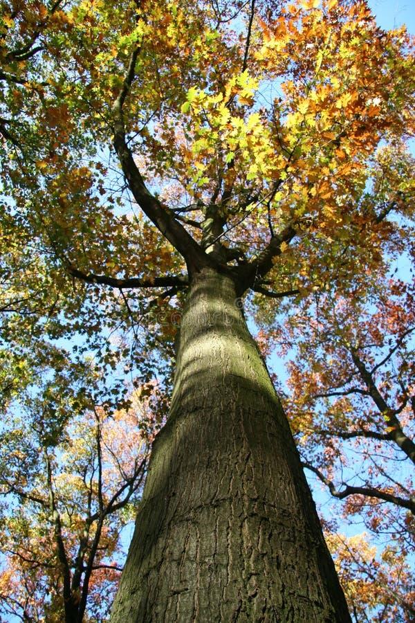 神奇结构树 库存图片