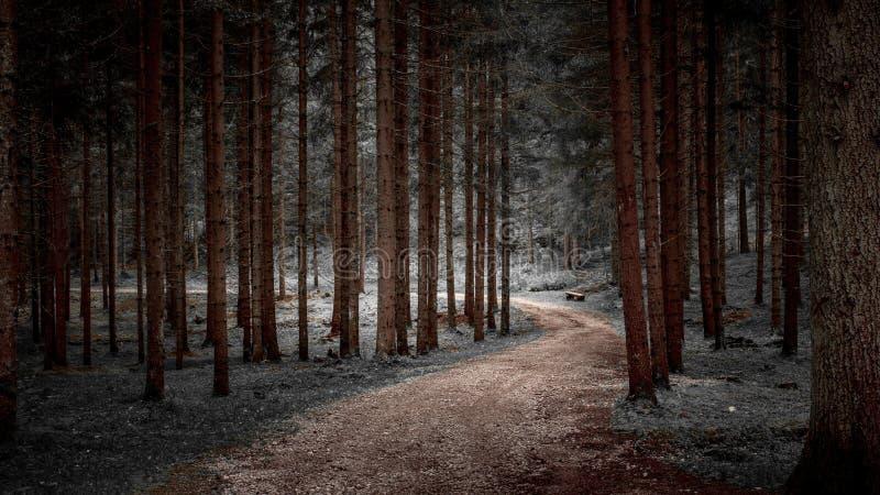 神奇道路在森林 库存图片