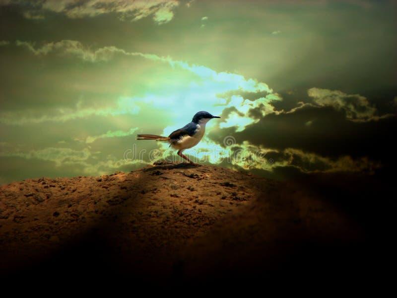 神的鸟 免版税库存图片