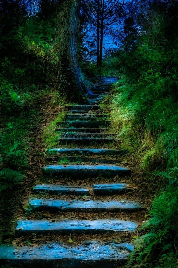 神秘的扔石头的道路穿过爱尔兰森林 免版税库存照片