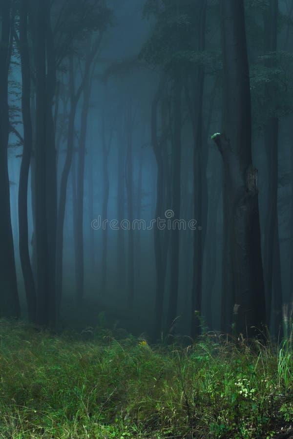神秘的森林 库存图片