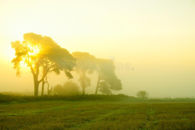 神秘的秋天早晨 免版税库存照片