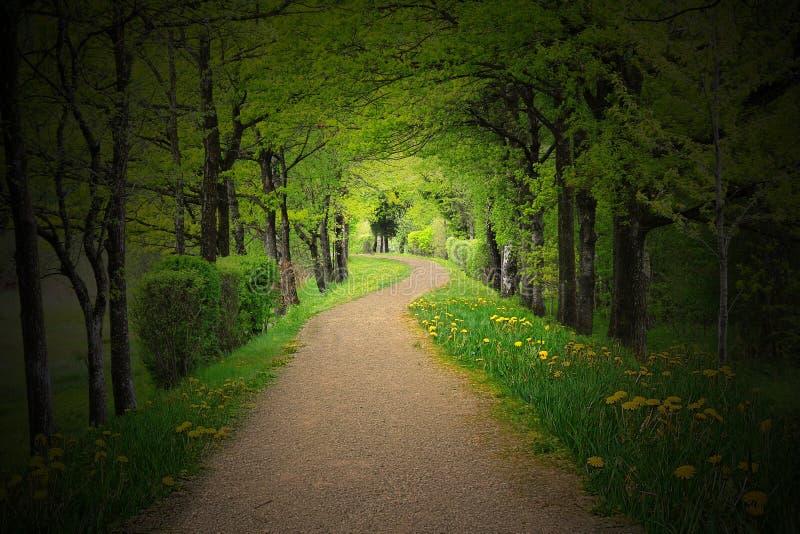 神秘的道路穿过有聚光灯的一个黑暗的森林 库存照片