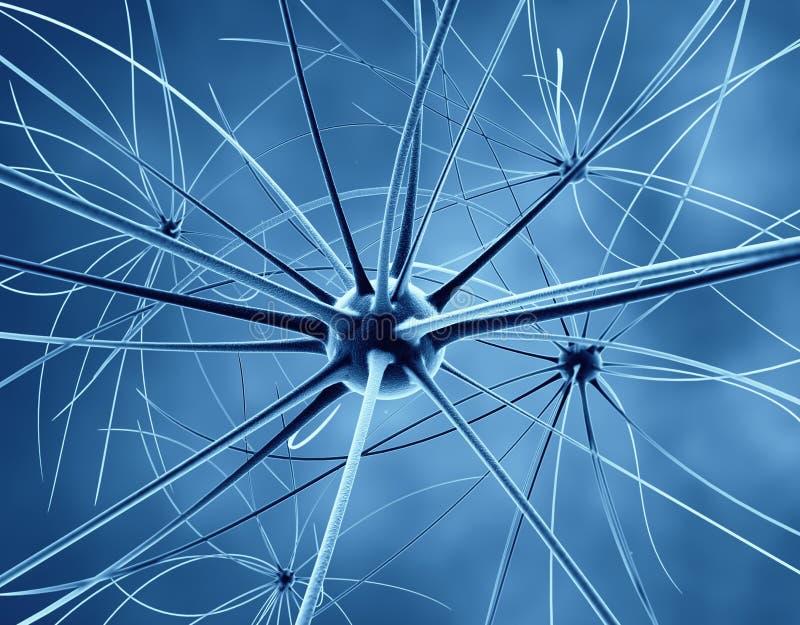 神经元和神经系统 皇族释放例证