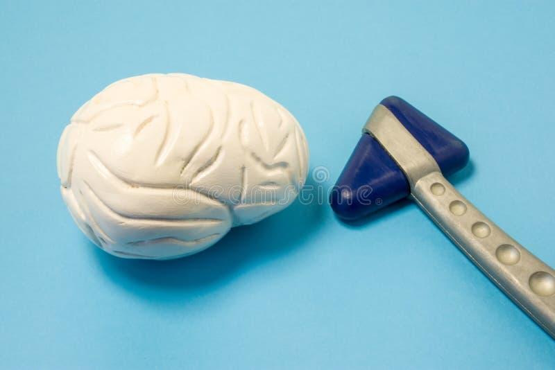 神经学家诊断器械-人脑神经学橡胶反射锤子和模型在蓝色一致的背景旁边的 Diagn 免版税库存照片