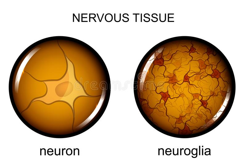 神经组织 神经元和神经胶质 皇族释放例证