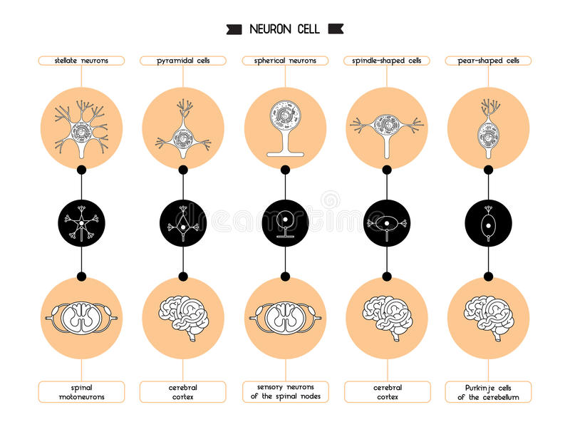 神经元池体形状 皇族释放例证