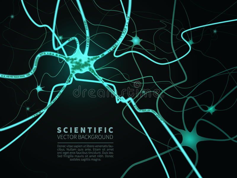 神经系统模型  库存例证