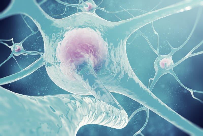神经系统的神经元 3d例证神经细胞 免版税图库摄影