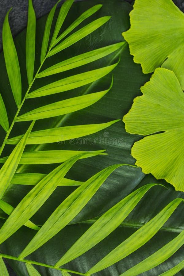 禅宗样式绿色叶子 免版税库存图片