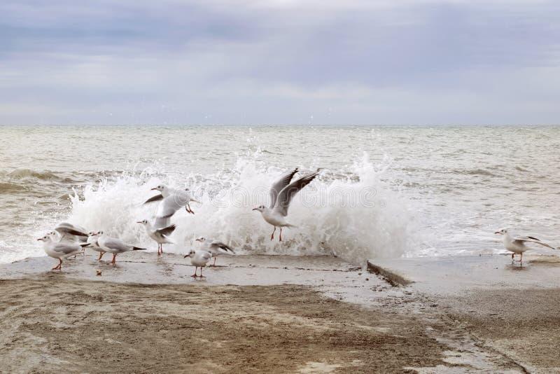 离开从防堤的一个小组海鸥惊吓由海波浪 库存图片
