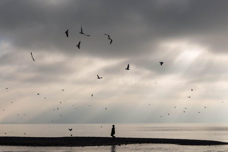 离开在日落的海滩与孤立陌生人和鸟 库存图片