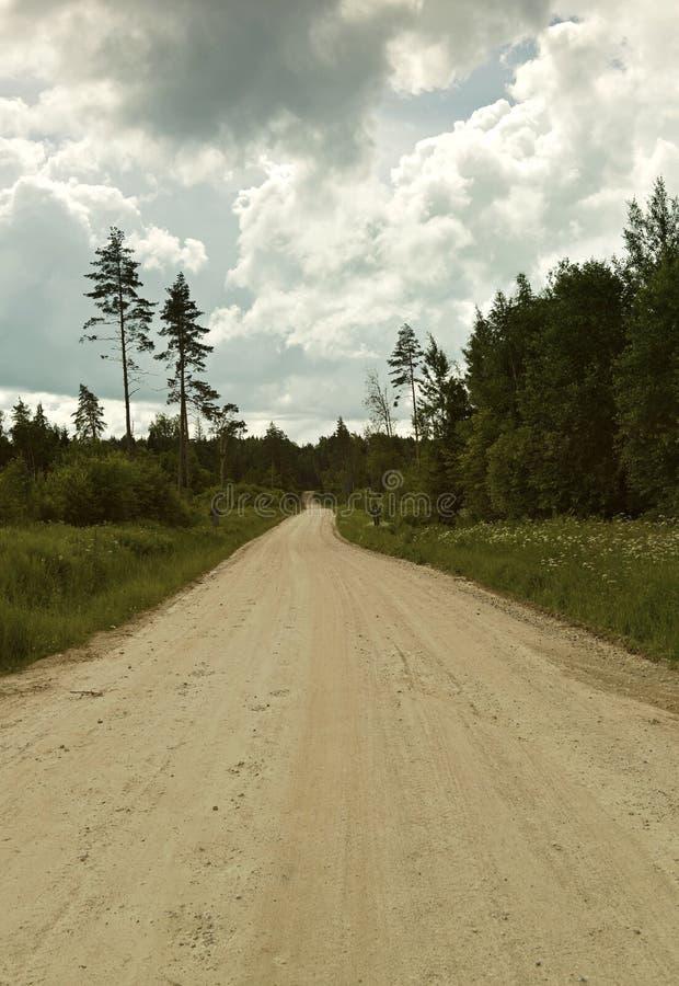 离开在距离的路在森林中间 库存照片