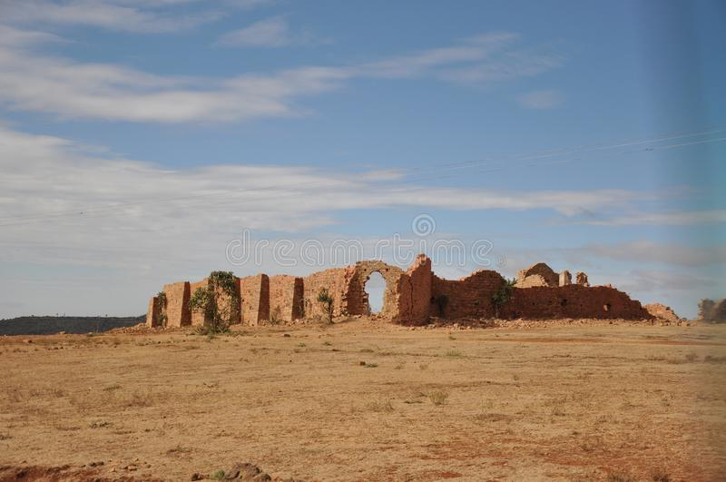 离开旱田,漠土的植物 免版税库存图片