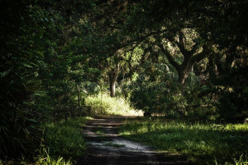 离开的土路在亚热带密林 免版税库存照片