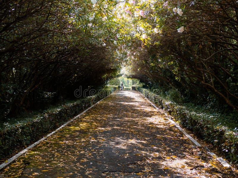 离开的胡同在公园,照亮由太阳的光芒 免版税库存图片