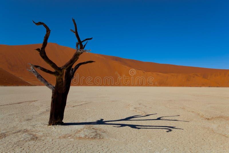 离开纳米比亚 库存图片