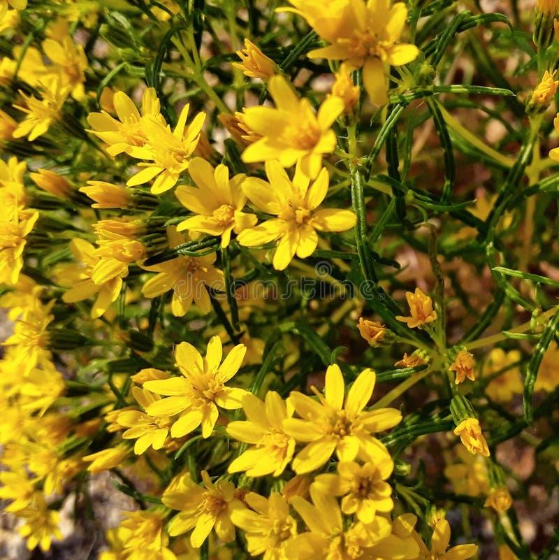 离开花明亮的黄色瓣绿色藤俏丽的雏菊 免版税库存照片