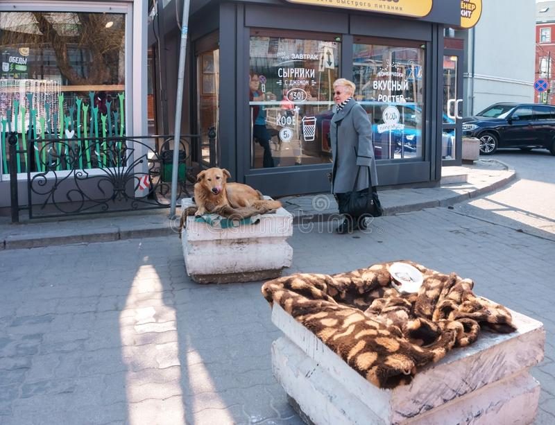 离群动物关心,在毯子的一只流浪狗 免版税库存图片