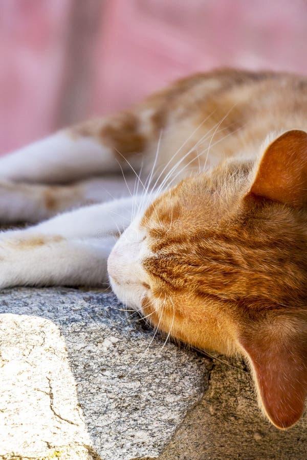 离群猫在卡瓦拉奥尔德敦,希腊北部 图库摄影