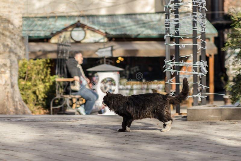 2019离群猫摄影师新的照片,逗人喜爱的恶意嘘声 免版税库存图片