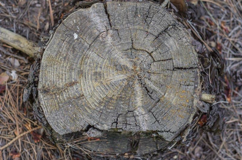 离群破裂的树桩 看法从顶向下 木纹理、镇压和年龄圆环 r r 图库摄影