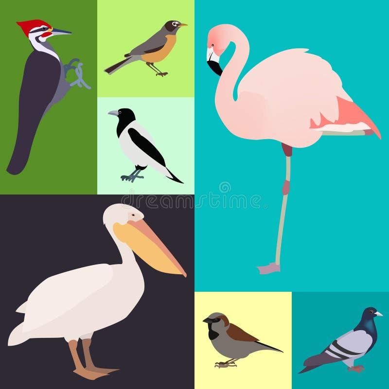 禽畜一套不同的种类鸟 皇族释放例证