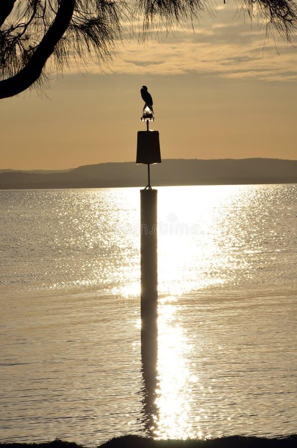 水禽的剪影在背后照明的 图库摄影