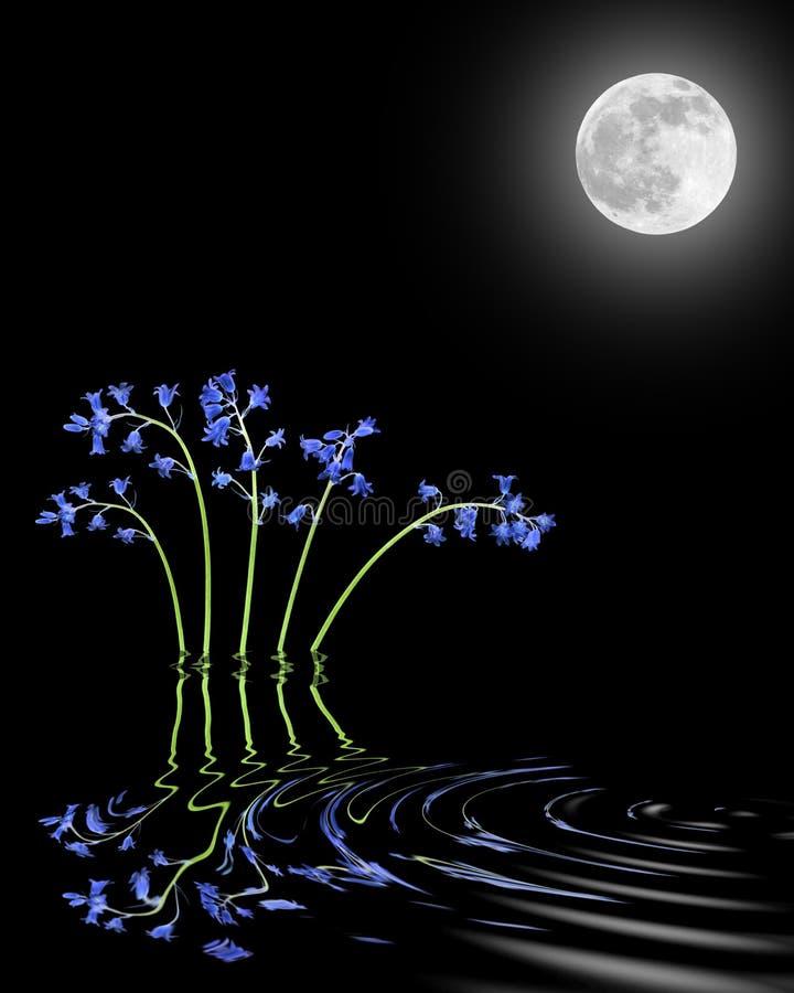 秀丽会开蓝色钟形花的草月亮 库存例证