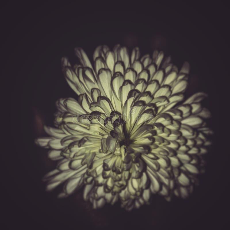 秀丽在黑暗中 库存照片