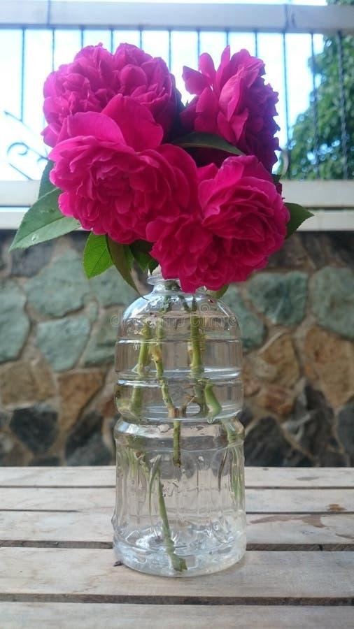 秀丽接近的花自然桃红色玫瑰色 免版税库存图片