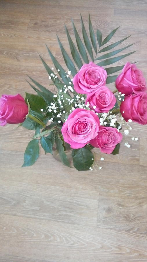 秀丽接近的花自然桃红色玫瑰色 库存图片