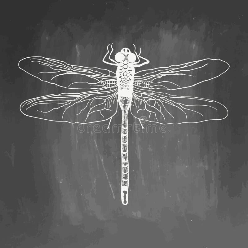?? 秀丽昆虫 手拉的储蓄例证 粉笔板图画 在黑板的白色现实剪影和 库存图片