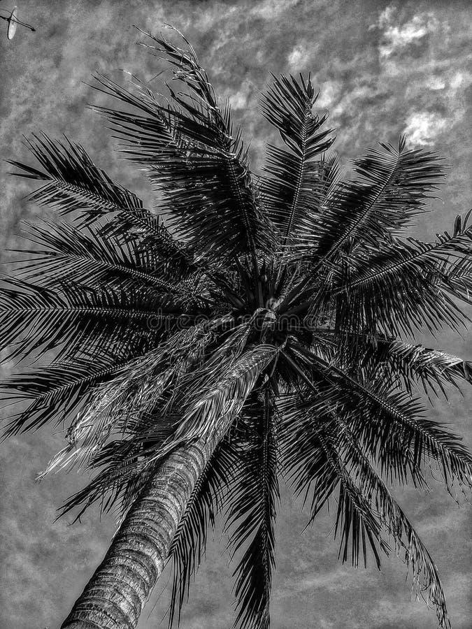 秀丽本质特异根源结构树 免版税库存图片