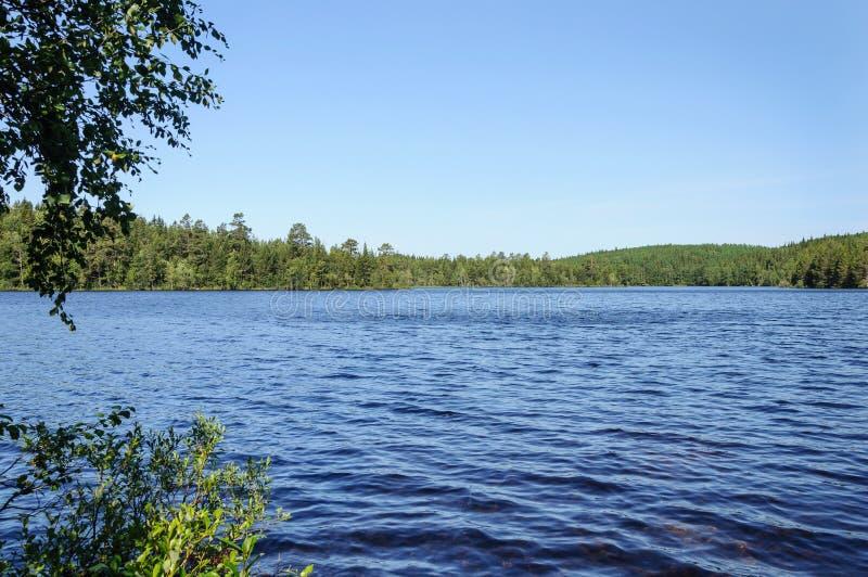 秀丽森林湖反映夏天 免版税图库摄影
