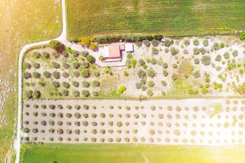 私有剧情房子和种植卓有成效的树 免版税库存照片