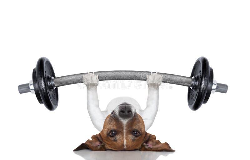 私有培训人狗 免版税库存图片