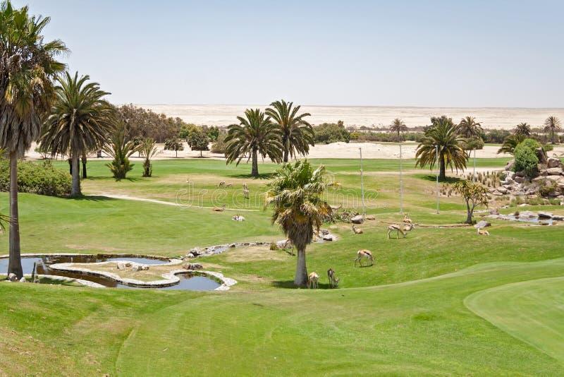 私有Rossmund沙漠高尔夫球场斯瓦科普蒙德,纳米比亚 免版税库存图片