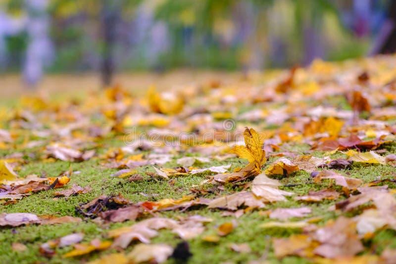 秋叶、草和土地 库存图片