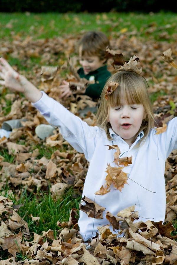 秋叶使用 库存图片