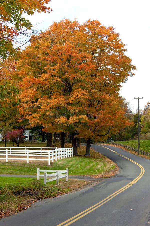 秋叶充满活力的槭树 库存照片