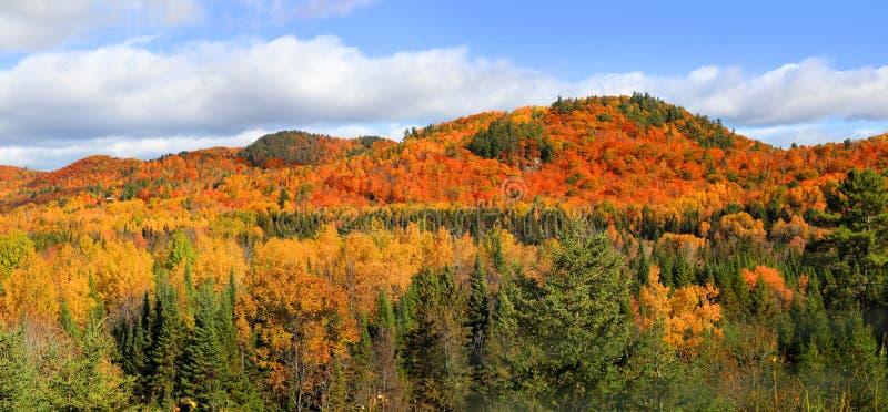秋叶全景风景在魁北克 免版税库存照片