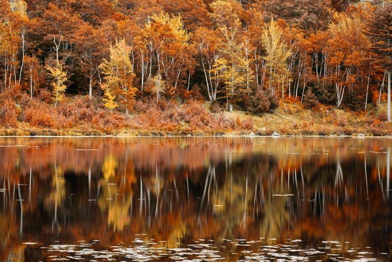 秋叶反射在约旦池塘,缅因 免版税库存照片
