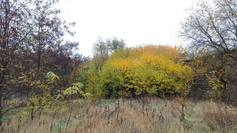 秋叶和树,在一个老房子旁边,风景 免版税图库摄影
